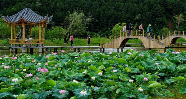 Scenery of lotus pond in Wuyishan, Fujian