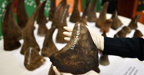 Malaysia seizes rhino horns worth $12 million
