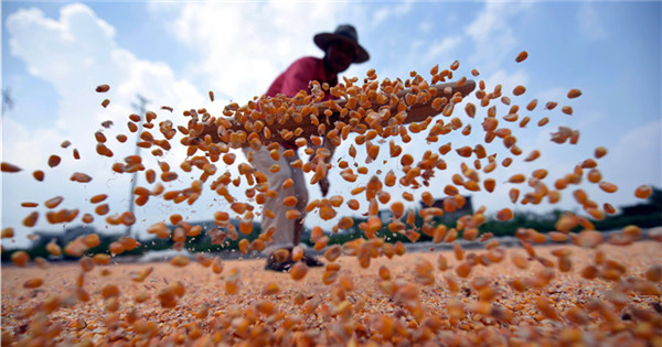 Harvest season celebrated across China