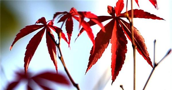 Beautiful autumn leaves in China's Jiangsu