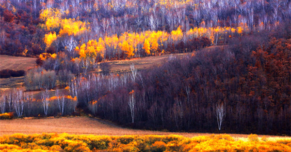 Splendid autumn scenery in Hulun Buir