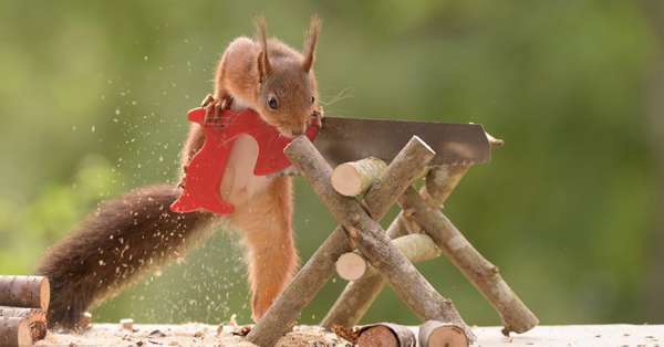 Hilarious photos show red squirrels using tiny tools