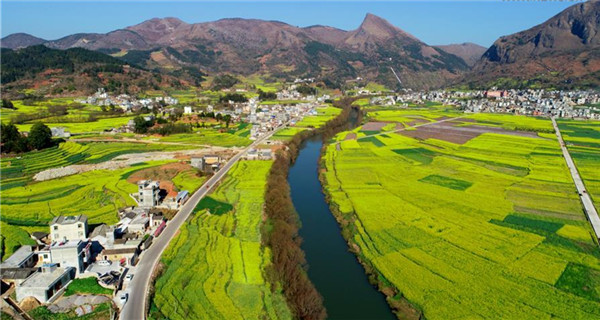 Aerial view of cole flowers beside Jiulong River