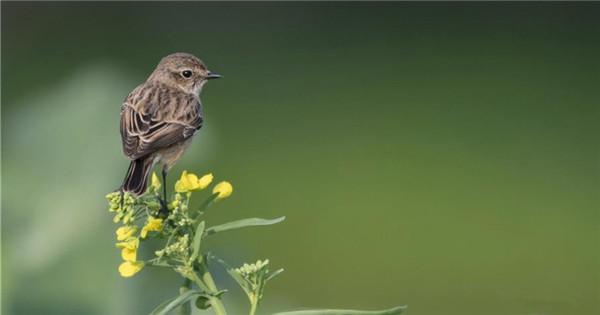 Bird rests on cole flower in Fuzhou