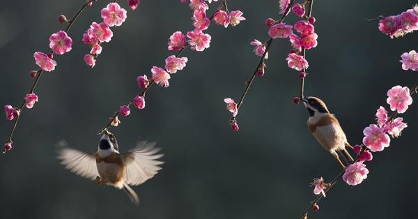 Scenery of flowering trees across China