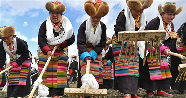 People attend ceremony marking start of spring plowing in Tibet