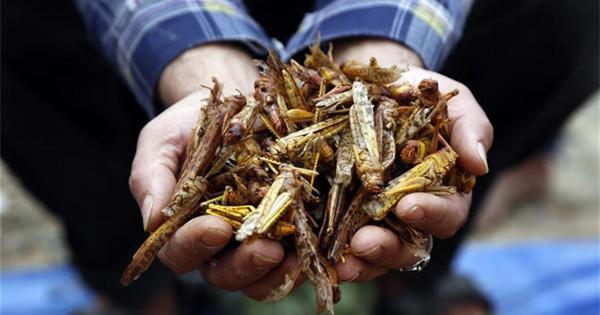 Swarms of locusts fly in Sanaa, Yemen