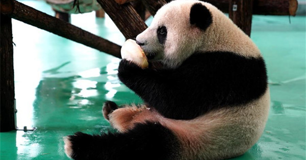 Shanghai Zoo takes measures to help its animals fend off summer heatwave