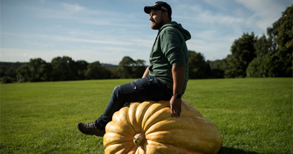 What a turnip! Yorkshire's giant vegetables