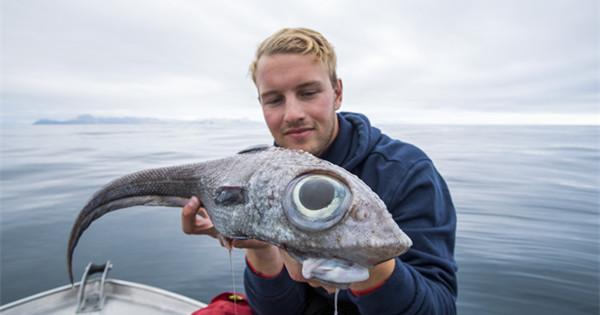 Bug-eyed ratfish caught by Norwegian fisherman