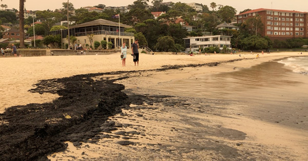 Australia bushfires: Ash washes up on New South Wales beach
