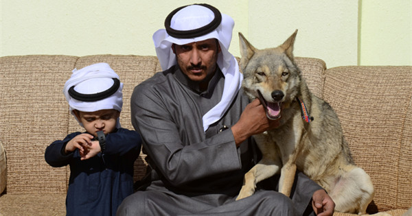 In pictures: Saudi family has lived with wolves for 11 years