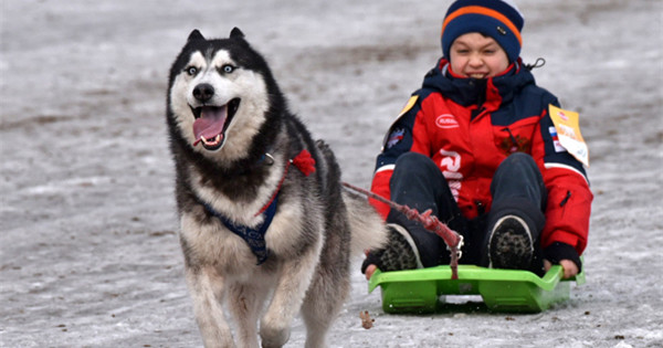 In pics: Sled dog race in Russia