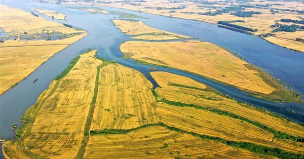 Aerial view of wheat field in Jiangsu