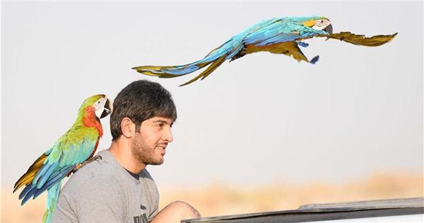 Parrot-training show held in Kuwait