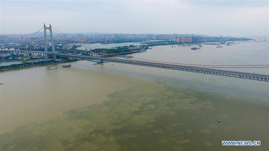 Major rivers, lakes see surging water levels in China