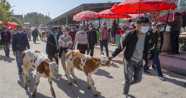 Cattle and sheep bazaar held in Shufu, NW China