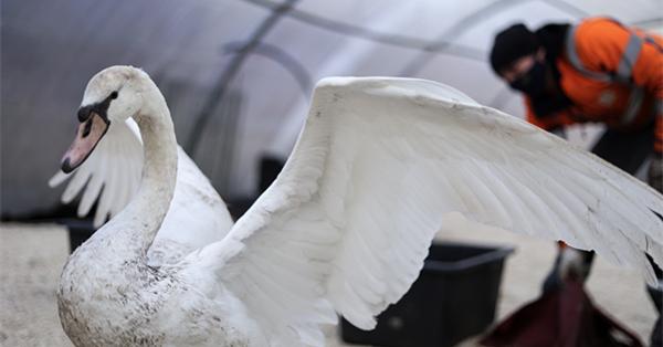 Special security measures to prevent bird flu be taken in Bruges