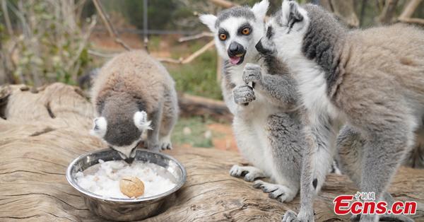 Animals enjoy speical congee for Laba Festival