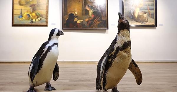 Penguins of Russian circus 'visit' art museum