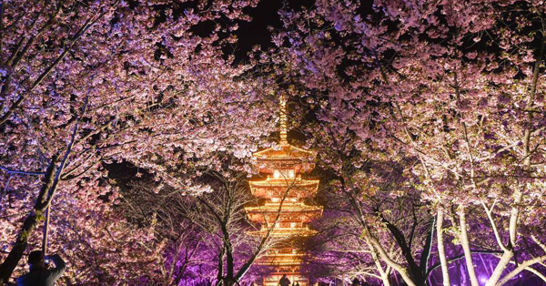 Cherry blossom festival kicks off in Wuhan