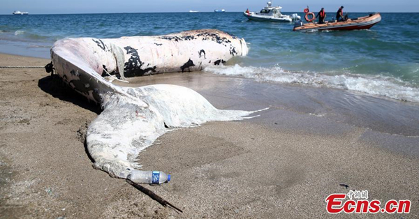 14-meter-long whale stranded on Turkish coast