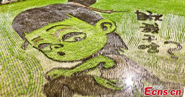 Paddy field paintings show beauty of Ningxia