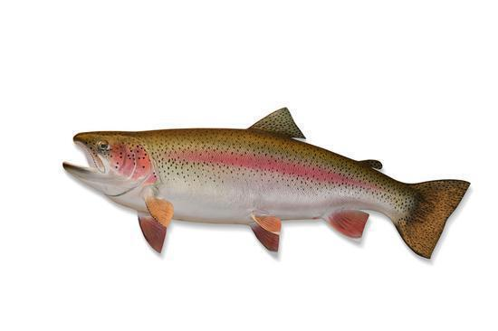 A trout  (Photo/China Daily)