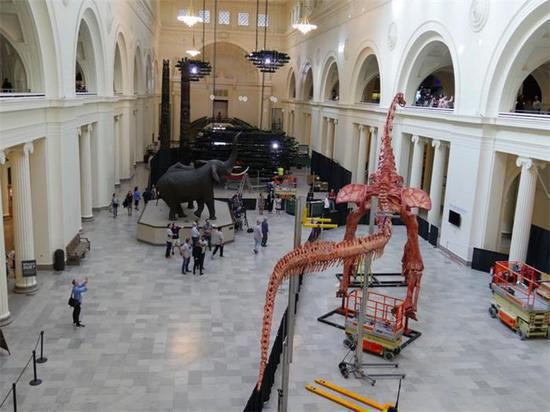 Biggest Dinosaur On Display At Chicago Museum