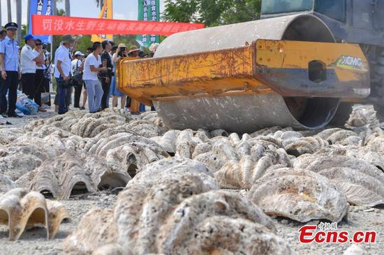 40 tons of aquatic wildlife products destroyed in Sanya