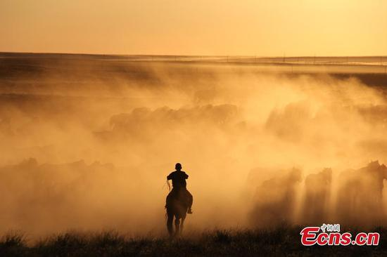 Nomads move livestock to summer pastures in Xinjiang