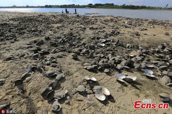 随着河流的缩小,居民急于收集蛤lam