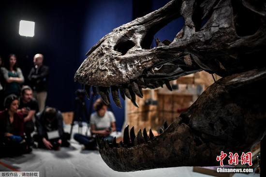 Paris hosts 67-million-year-old Tyrannosaurus Rex