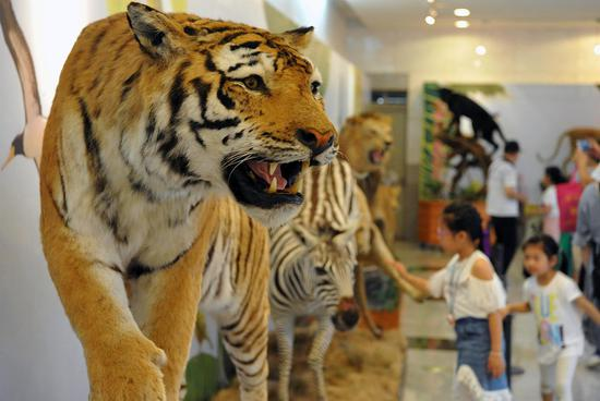 Vivid animal specimens attract visitors in Fuzhou