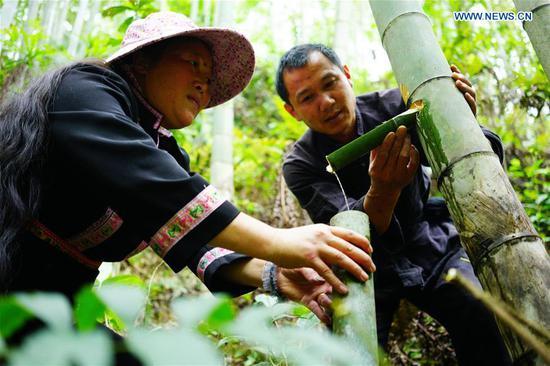 Bamboo wine industry in Longji Town, Guangxi