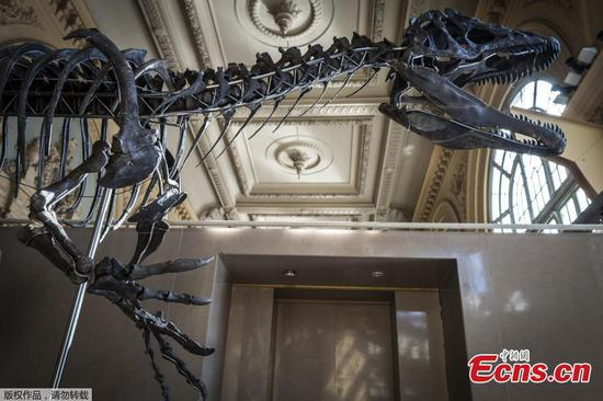 A dinosaur skeleton is displayed before its auction by Aguttes auction house in Lyon, France, March 14, 2018. (Photo/Agencies)