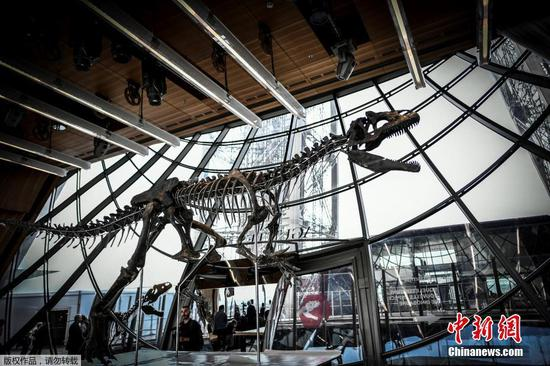 150-mln-year-old dinosaur skeleton sells for $2 million
