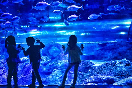Children enjoy a glimpse of marine life in an inland aquarium during a customized family trip organized by Nanjing Marine World on May 19, in Nanjing, Jiangsu province. (Photo/Cui Xiao for China Daily)