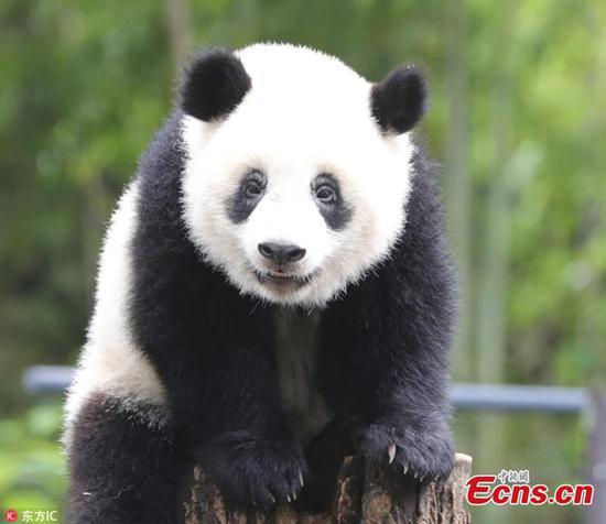 Panda Xiang Xiang at Tokyo zoo turns 1 year old