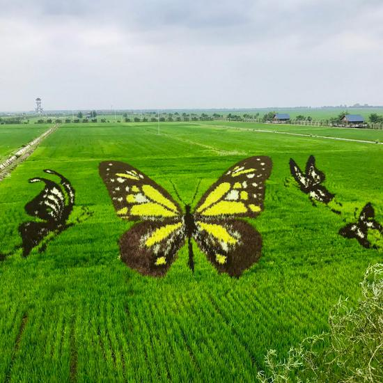 3D paddy field 'art' a highlight of Shenyang