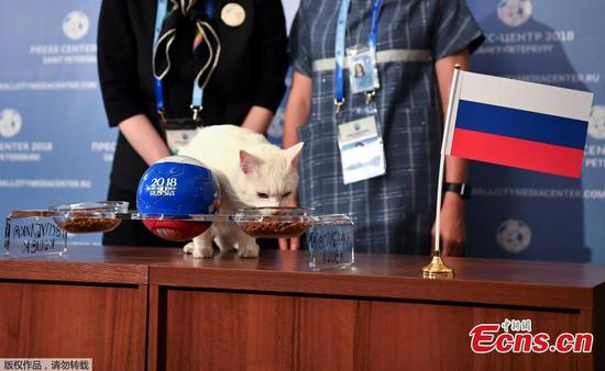 World Cup winners predicted by Russia's 'psychic' cat Achilles