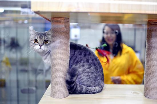 Experts call for stricter regulation of nation's booming pet economy