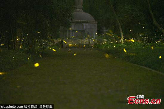 Fireflies light up night sky over Linggu Temple