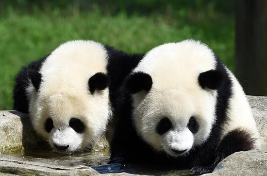 DNA analysis reveals distinct lineage of ancient panda in south China