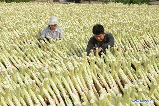 Maozhuang Town's handmade brooms sold to many foreign markets