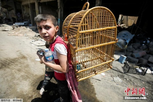An Iraqi boy carries a birdcage on his back as he flees from the Old City of Mosul on June 20, 2017. (Photo/Agencies)
