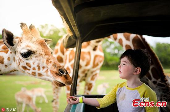 Boy plays with giraffe