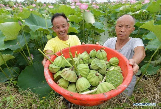 Lotus plantation base helps improve benefit for villagers in E China's Jiangxi