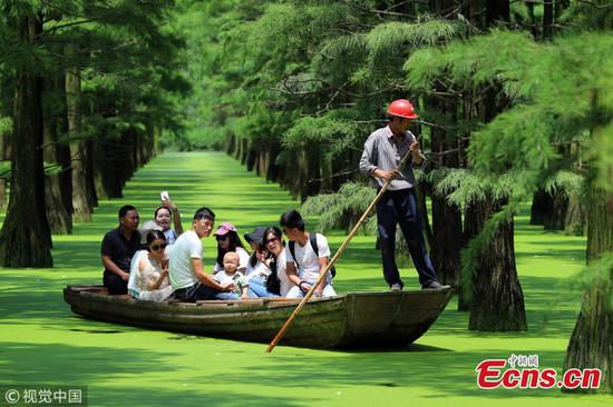 Wuhan's floating forest a huge attraction for tourists