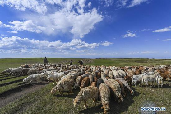 Herdsmen transfer livestock to summer pastures on Barlik Mountain, Xinjiang